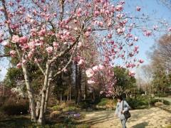 芝生と日向の庭・木蓮