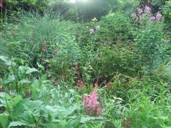 芝生の庭から(正面)