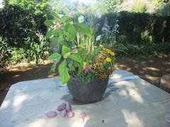 花仲間ガーデンのウエルカム寄せ植え